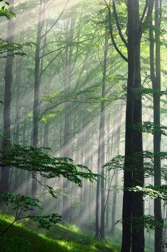 Sh trees